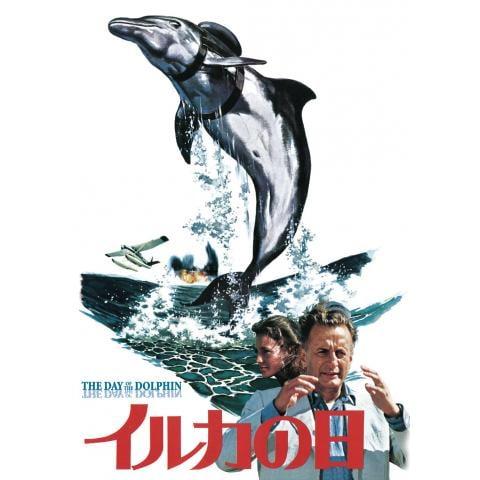 イルカの日