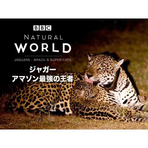 ジャガー アマゾン最強の王者